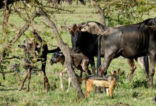 kicheche-valley-camp-masai-mara
