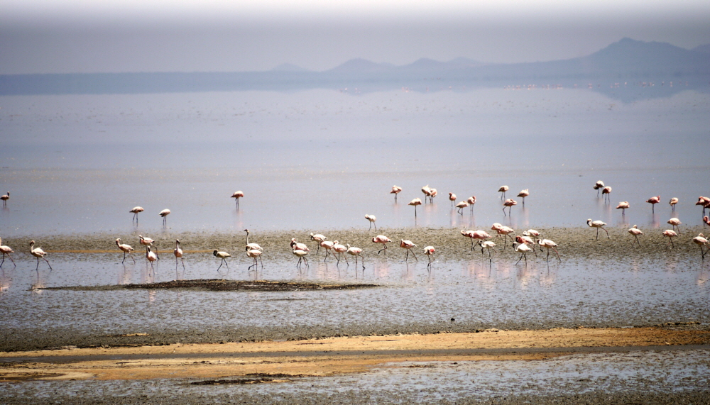 Flamingos Lake Manyara